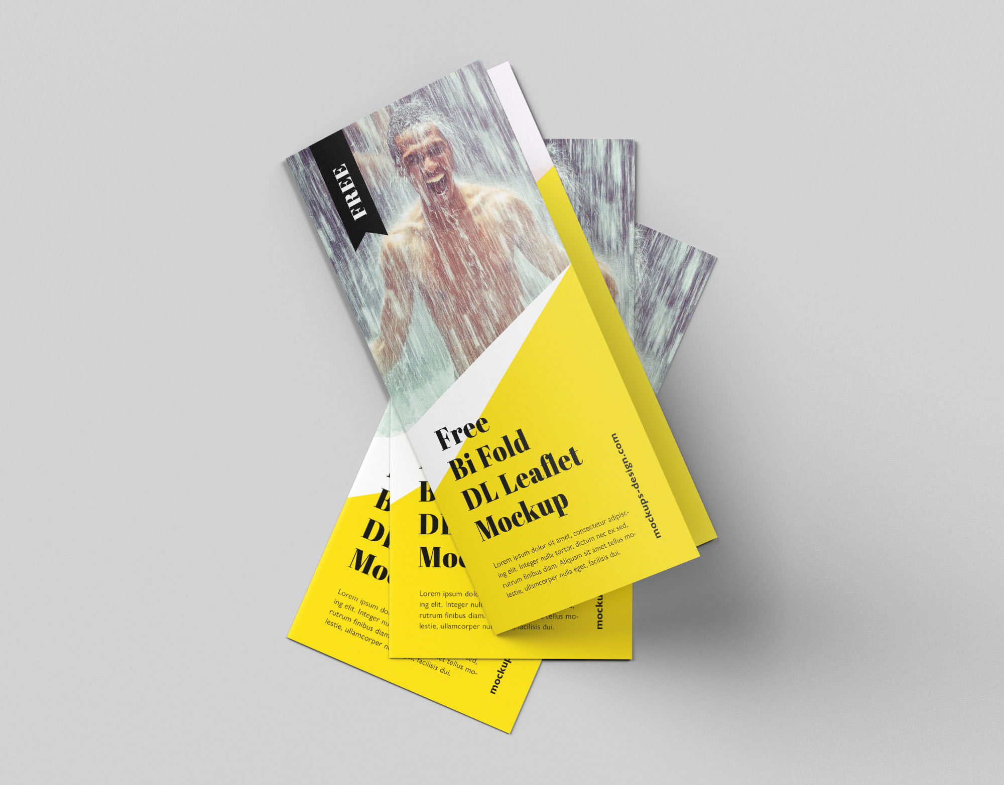 Dl Bifold Brochure Mockup