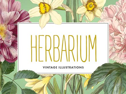 Herbarium Illustrations