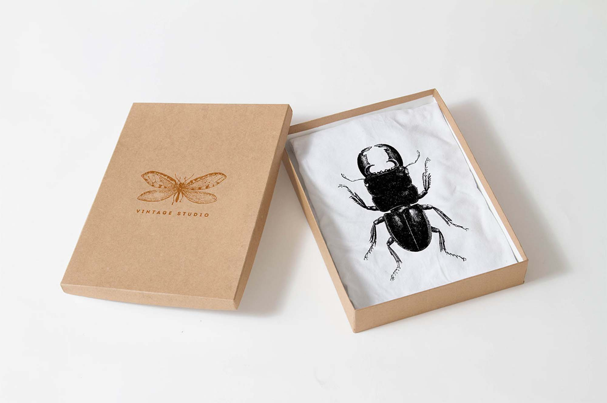 Insect Illustrations