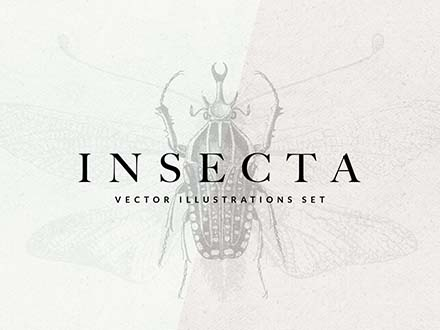 Insect Vector Illustrations