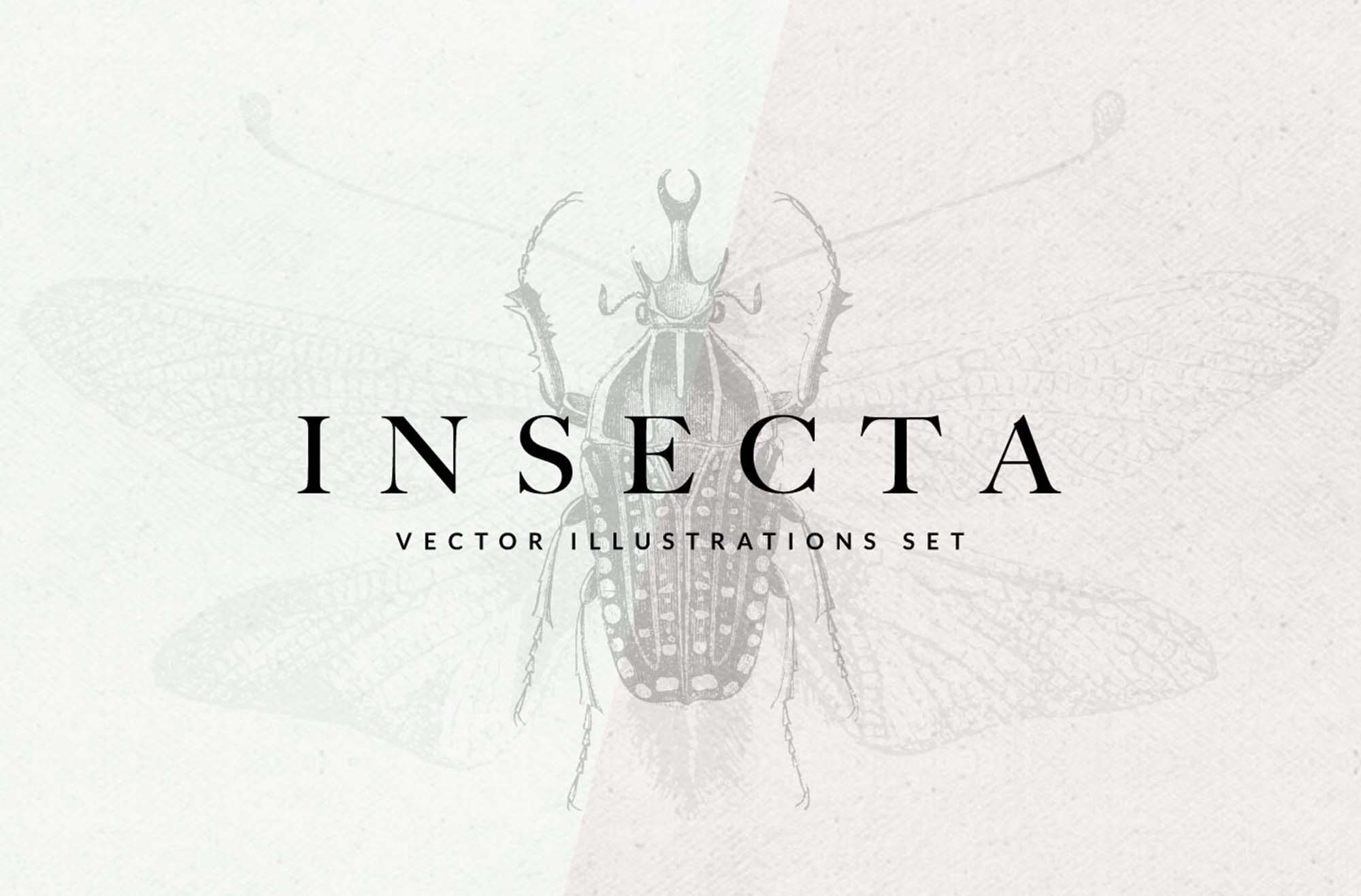 Insecta Illustrations