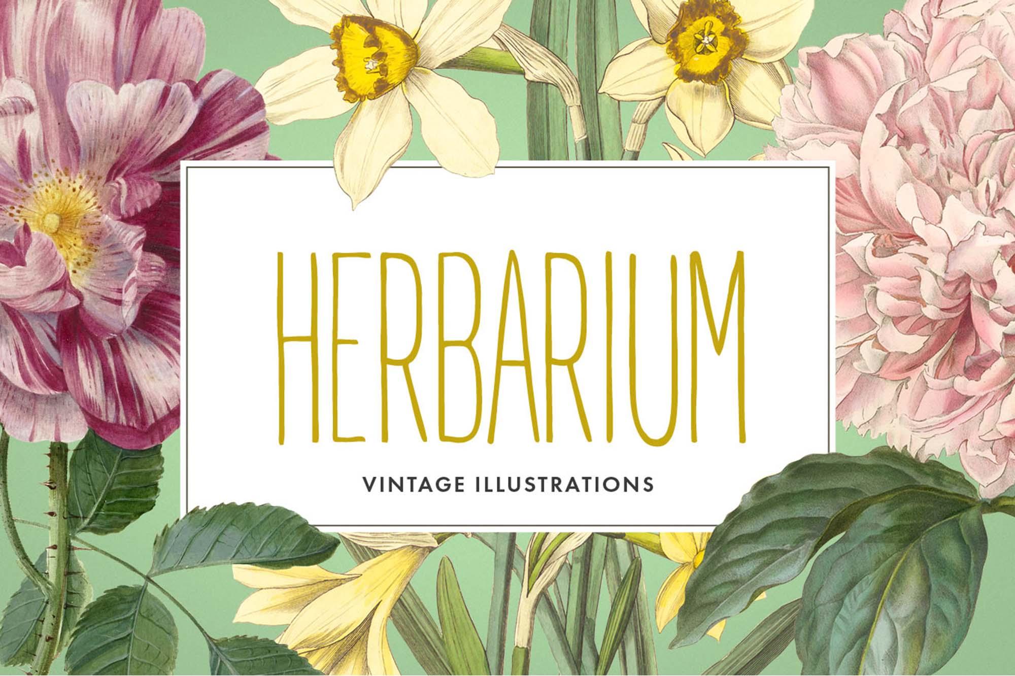 Herbarium Illustrations