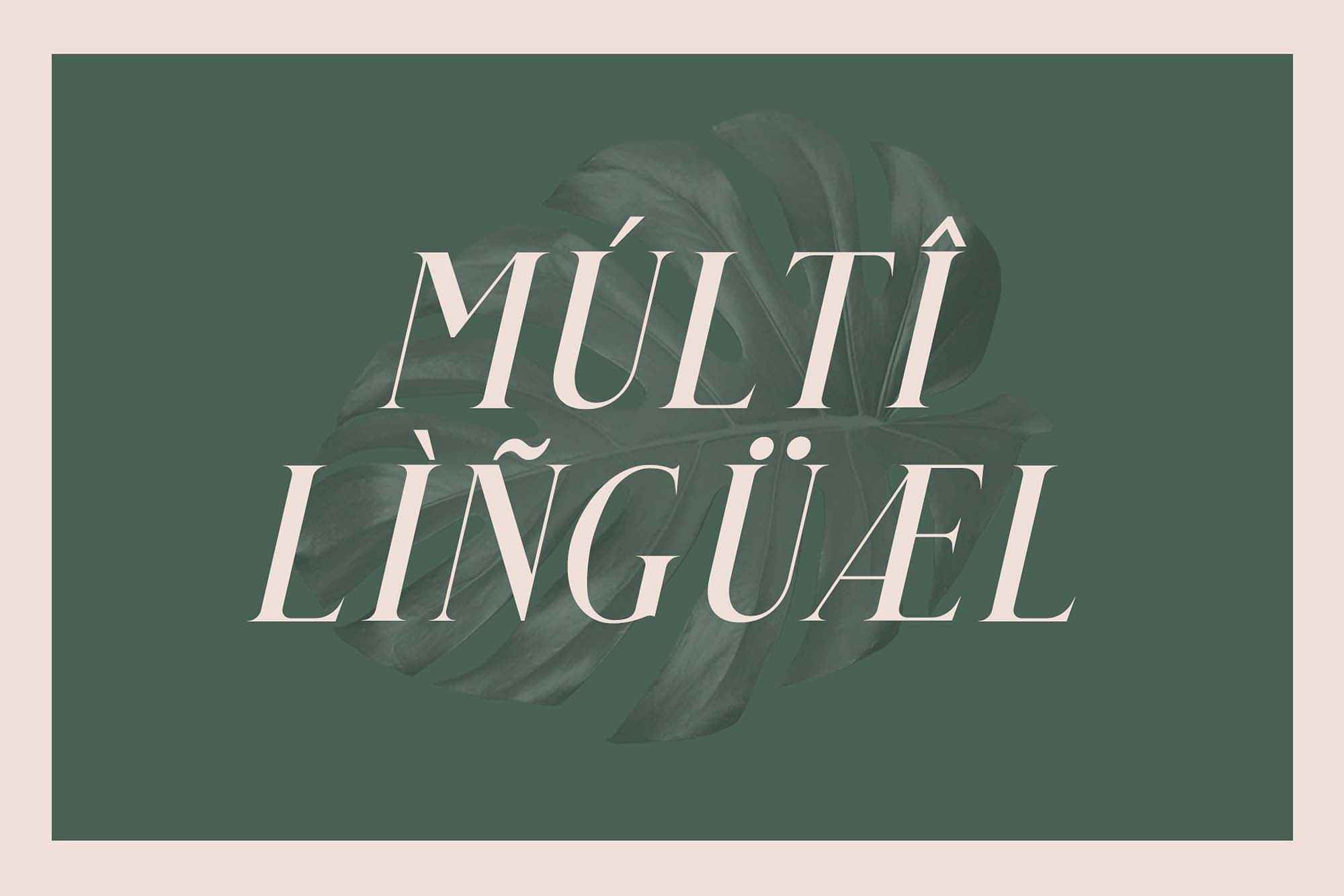 Qualey Serif Font Muli lingual