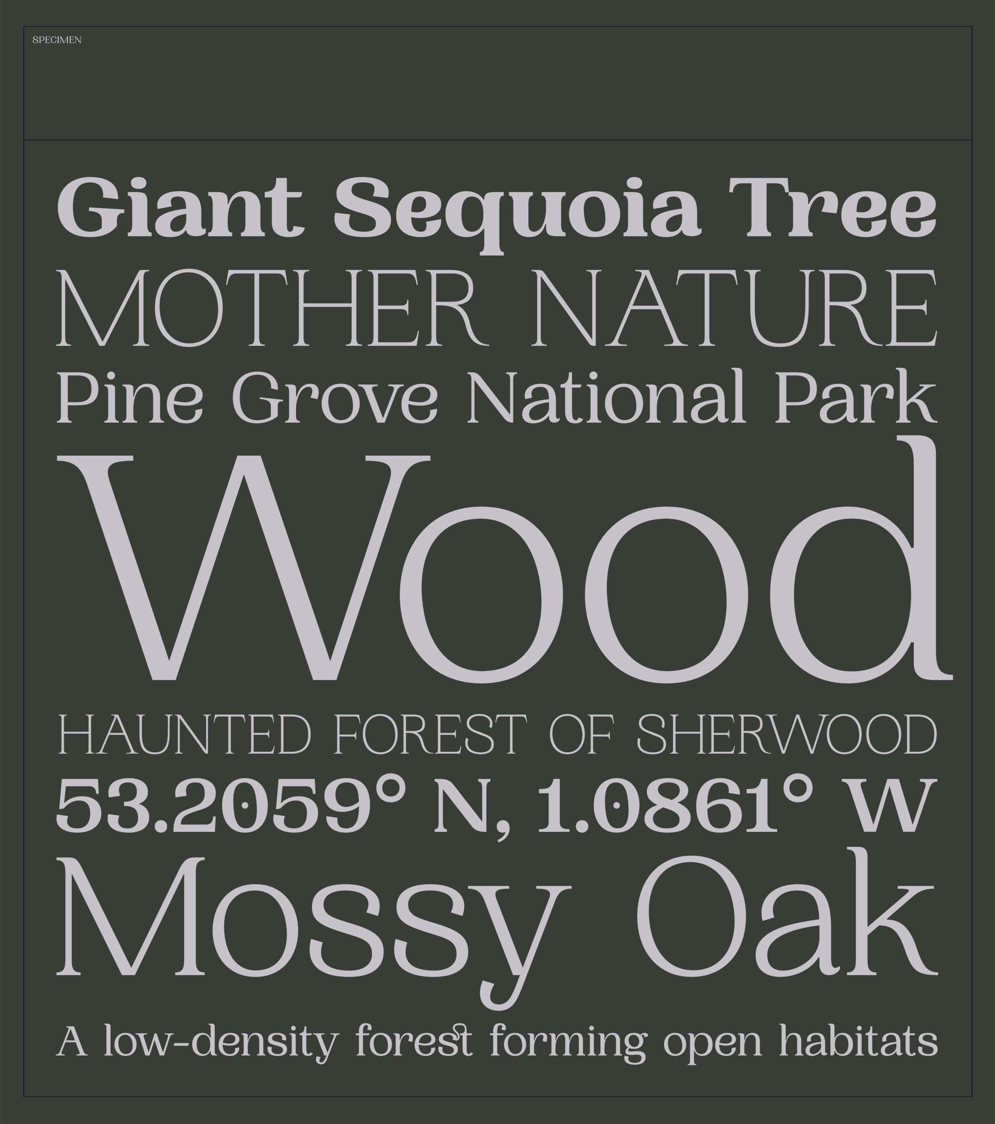Woodland Serif Typeface 3