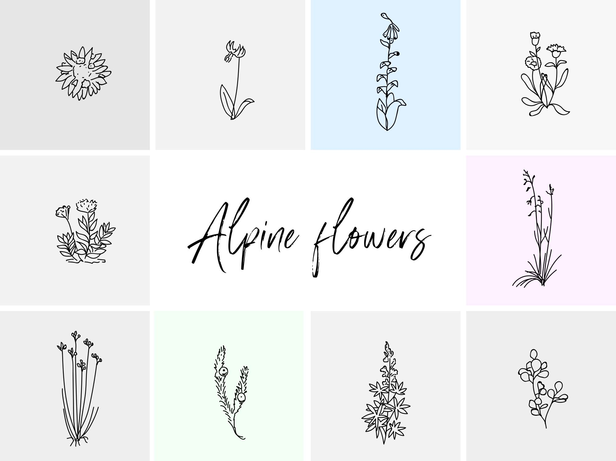 Alpine Hand-drawn Vector Flowers Illustration