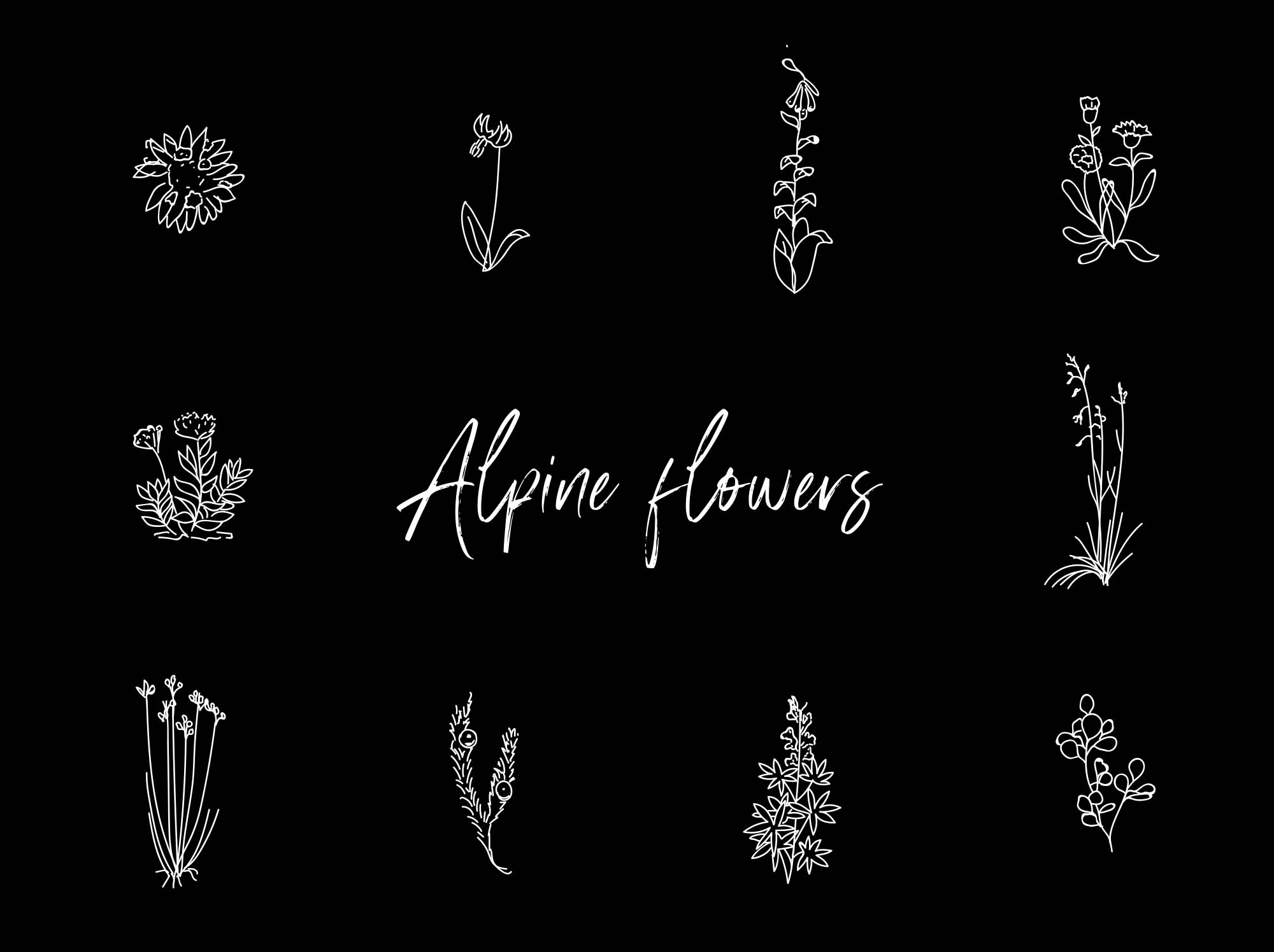 Alpine Hand-drawn Vector Flowers Illustration 2