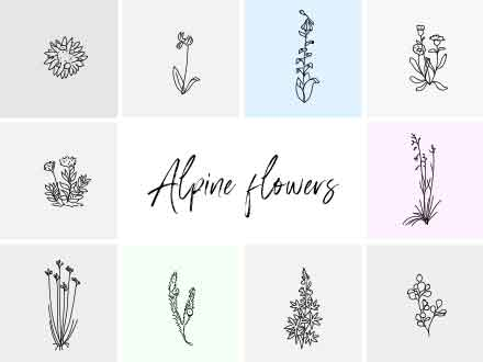 Alpine Hand-drawn Vector Flowers Illustration