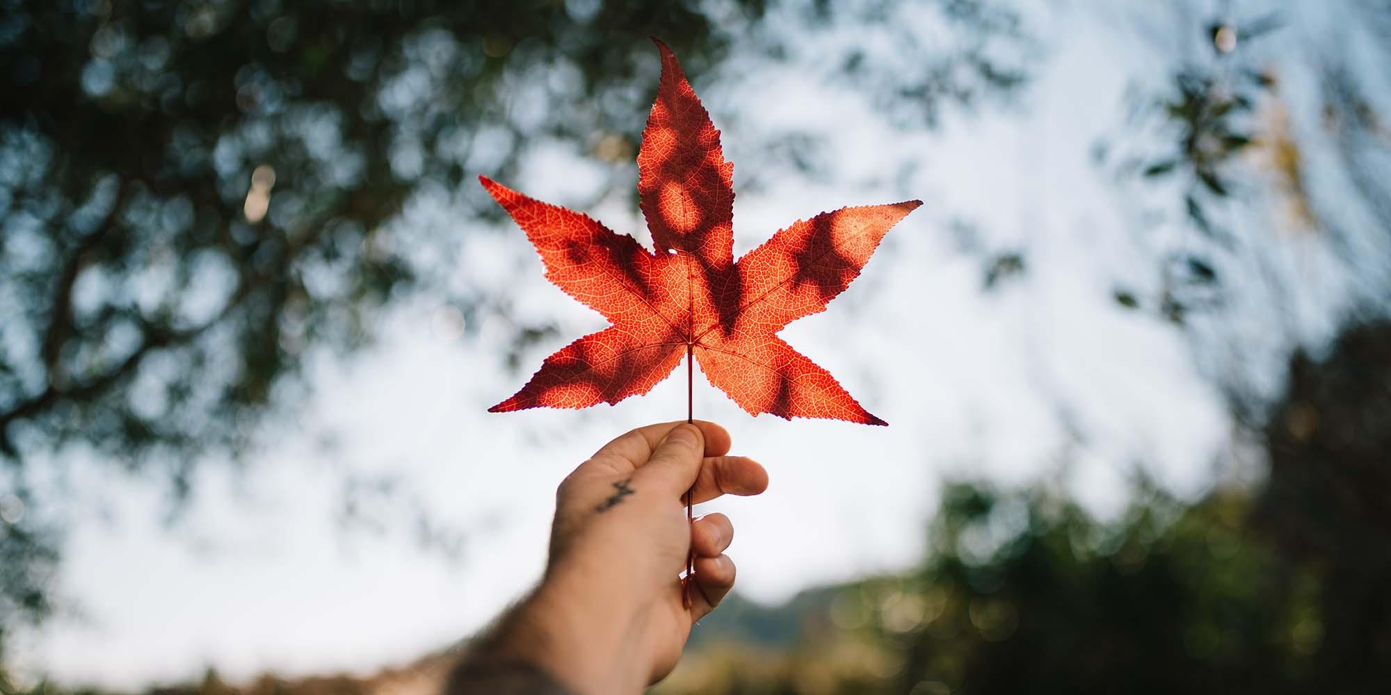 Canada Instagram