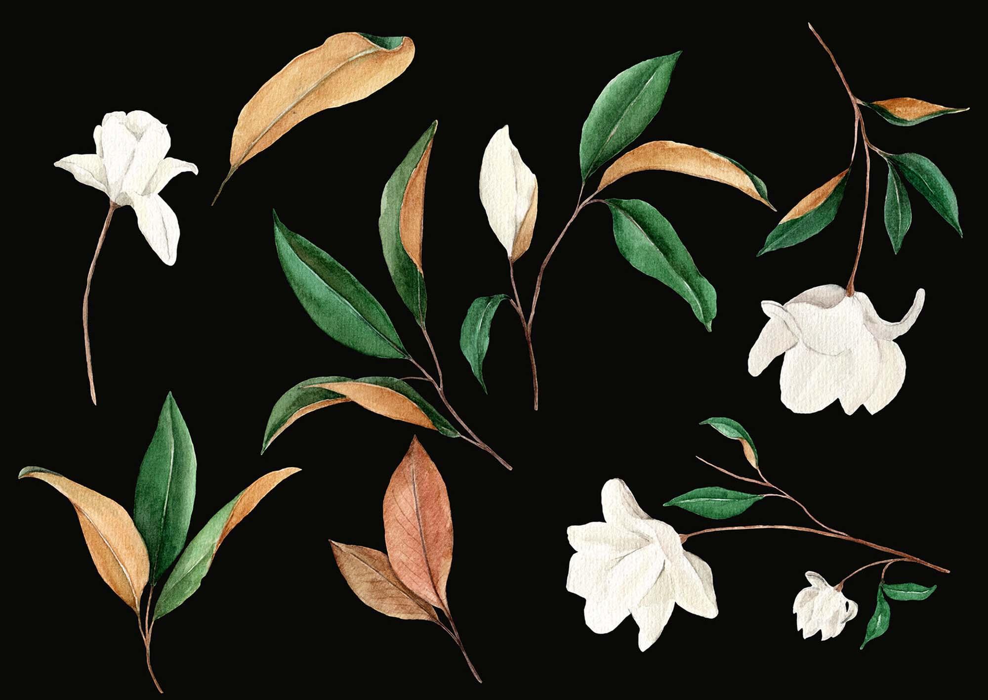 Magnolia Floral Graphic Design Elements
