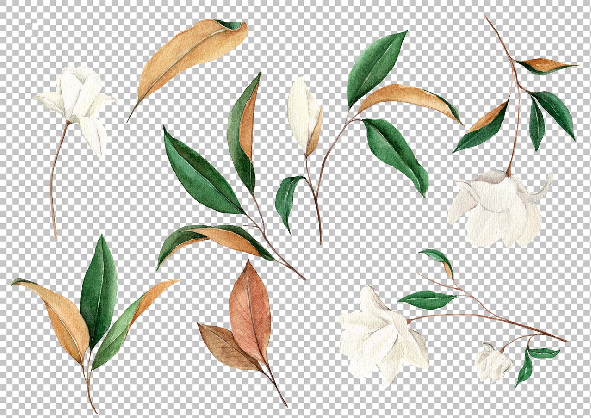 Magnolia Floral Graphic Design Elements 2