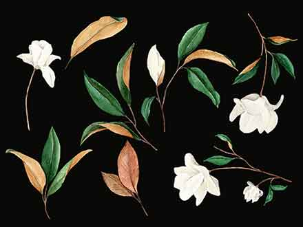 Magnolia Floral Graphic Design Elements