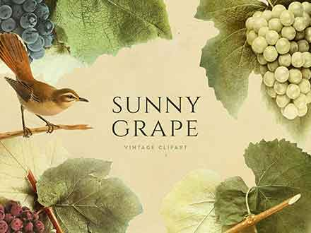 Sunny Grape Vintage Clipart