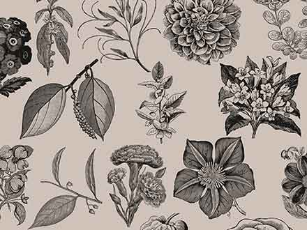 Vintage Flower Graphics