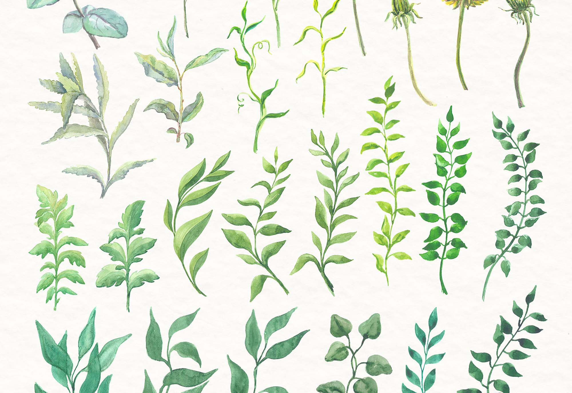 Watercolor Florals 2
