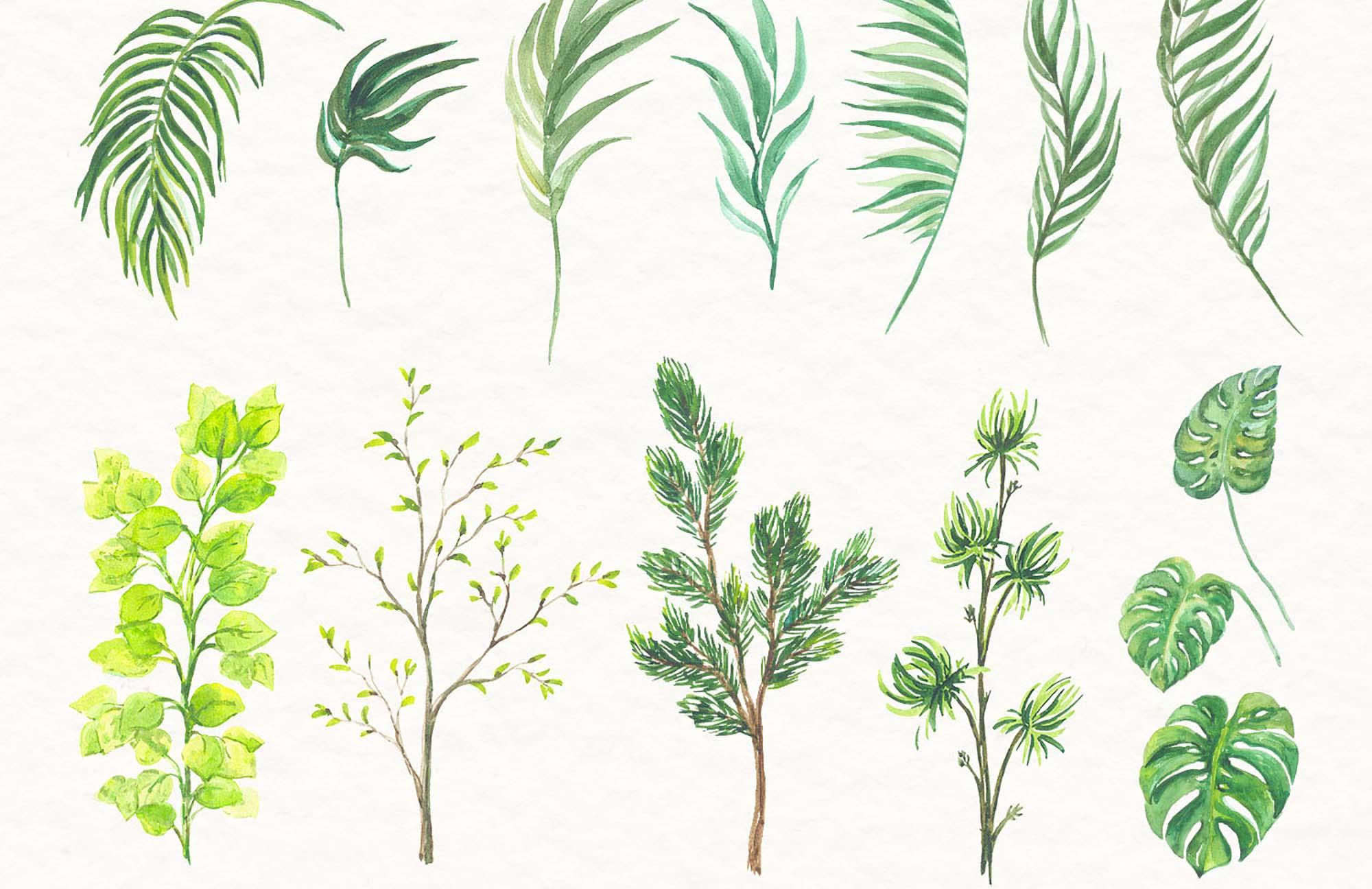 Watercolor Florals 5