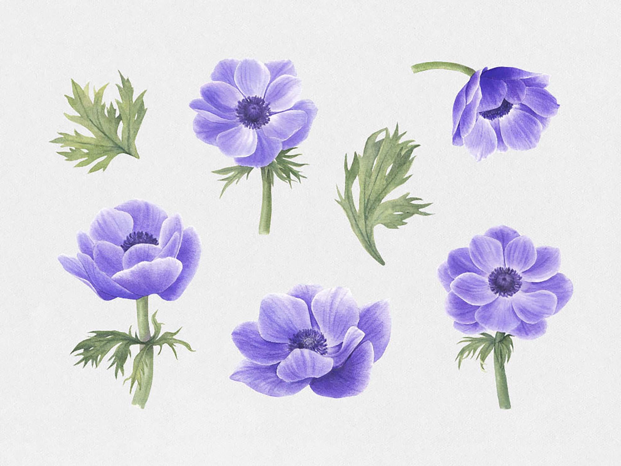 Anemone & Dahlia Flowers Clipart 1