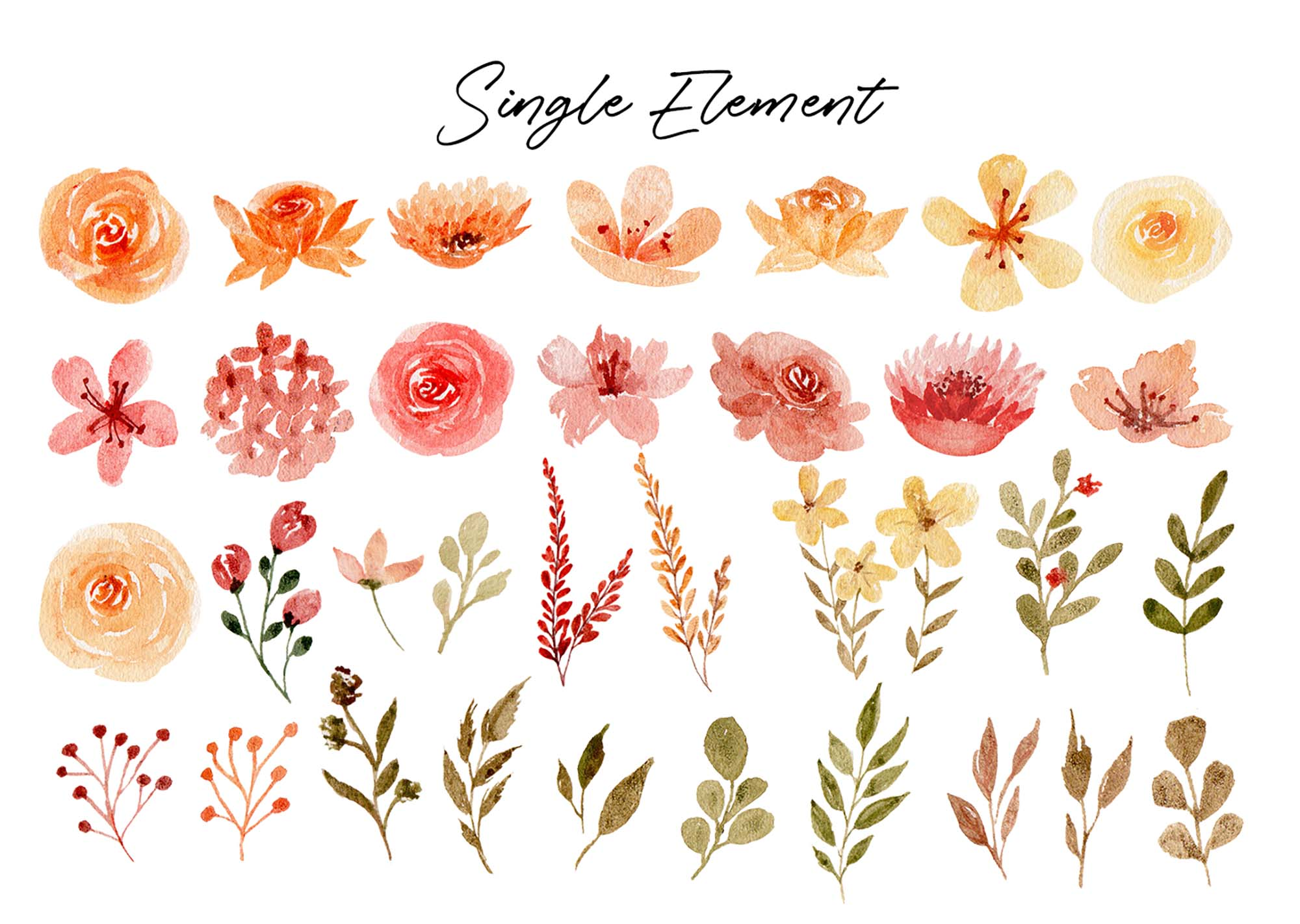 Delicate Orange Hand Painted Watercolor Clipart