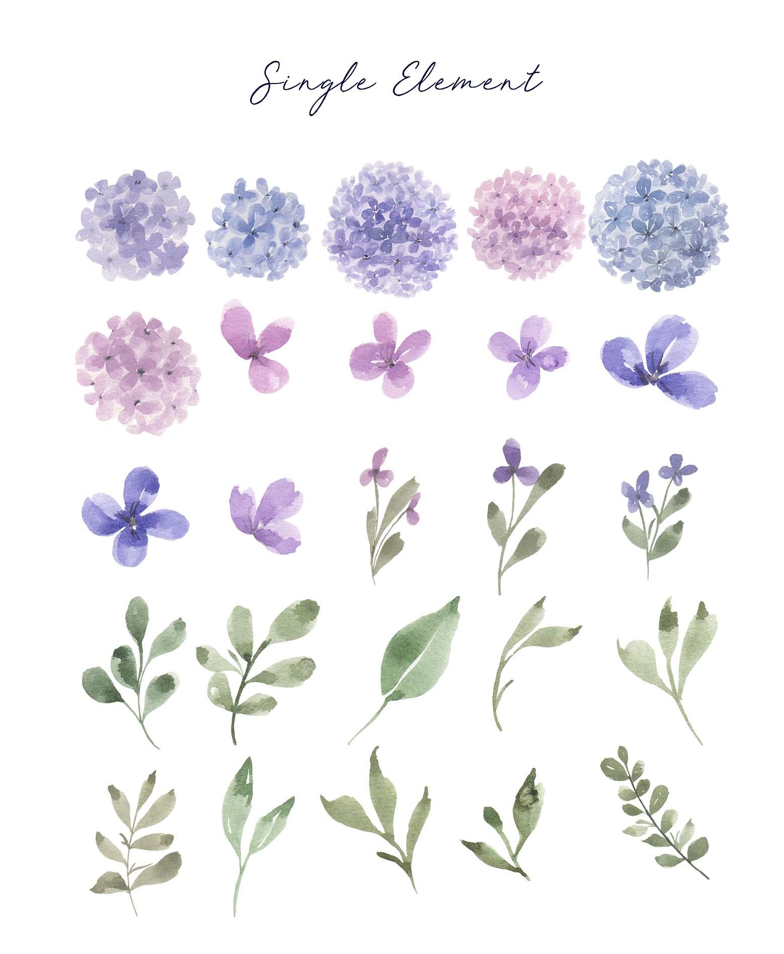 Hydrangea Watercolor Design Elements 1