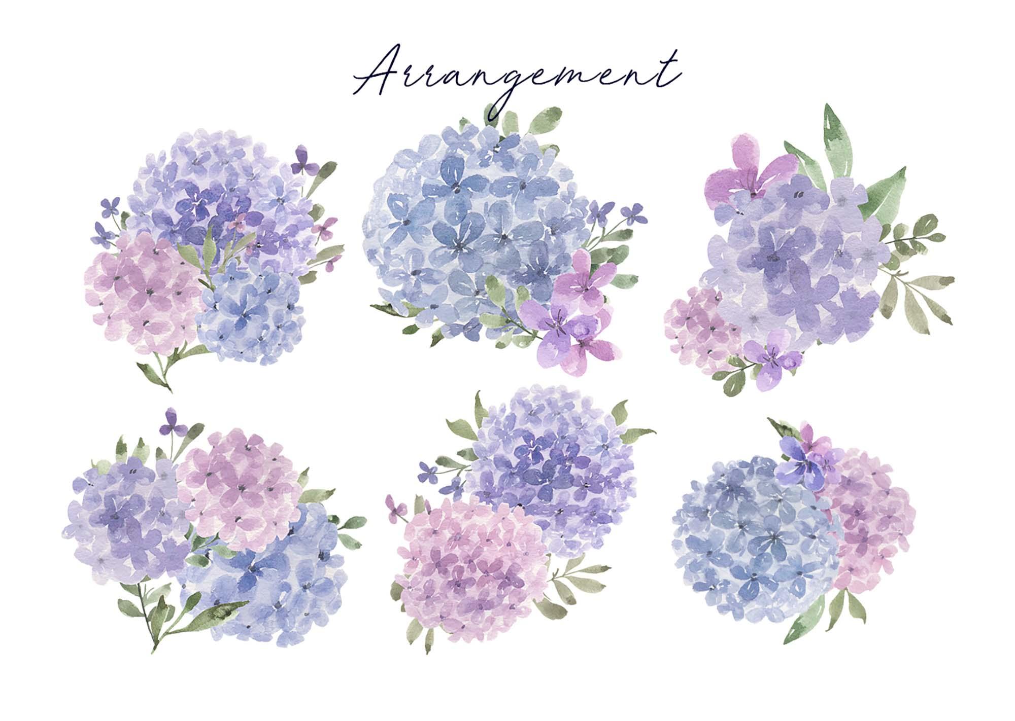 Hydrangea Watercolor Design Elements 2
