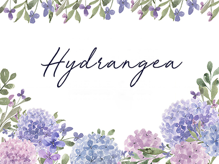 Hydrangea Watercolor Design Elements