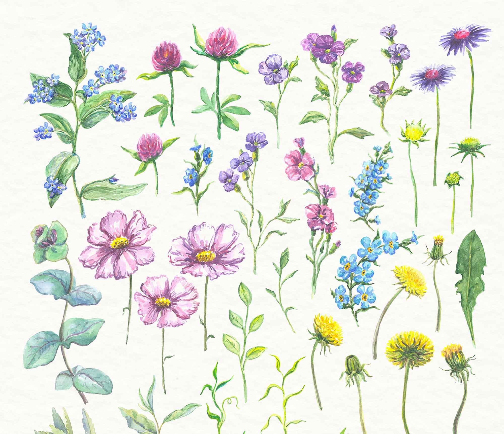 Watercolor Floral Elements 1