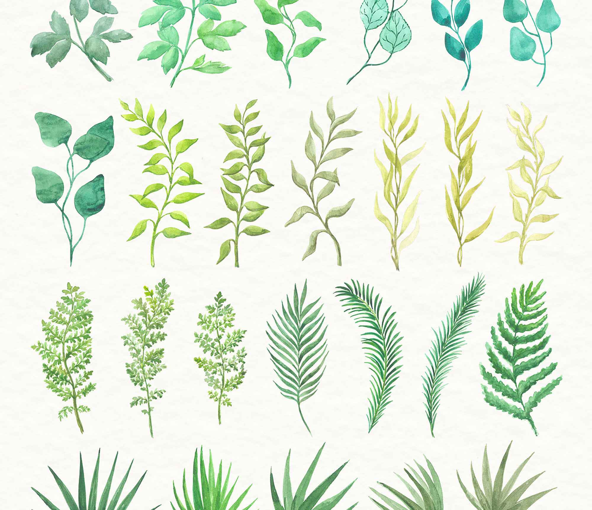 Watercolor Floral Elements 3